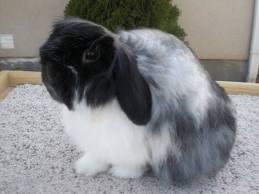 Identify Rabbit Breed