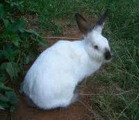 of paw Bottom rabbits